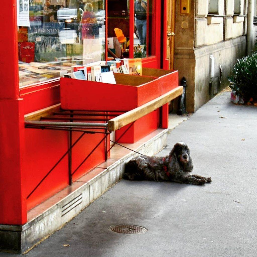 Kto zaparkowa psa przed ksigarni? A potem zagin bez wiecihellip