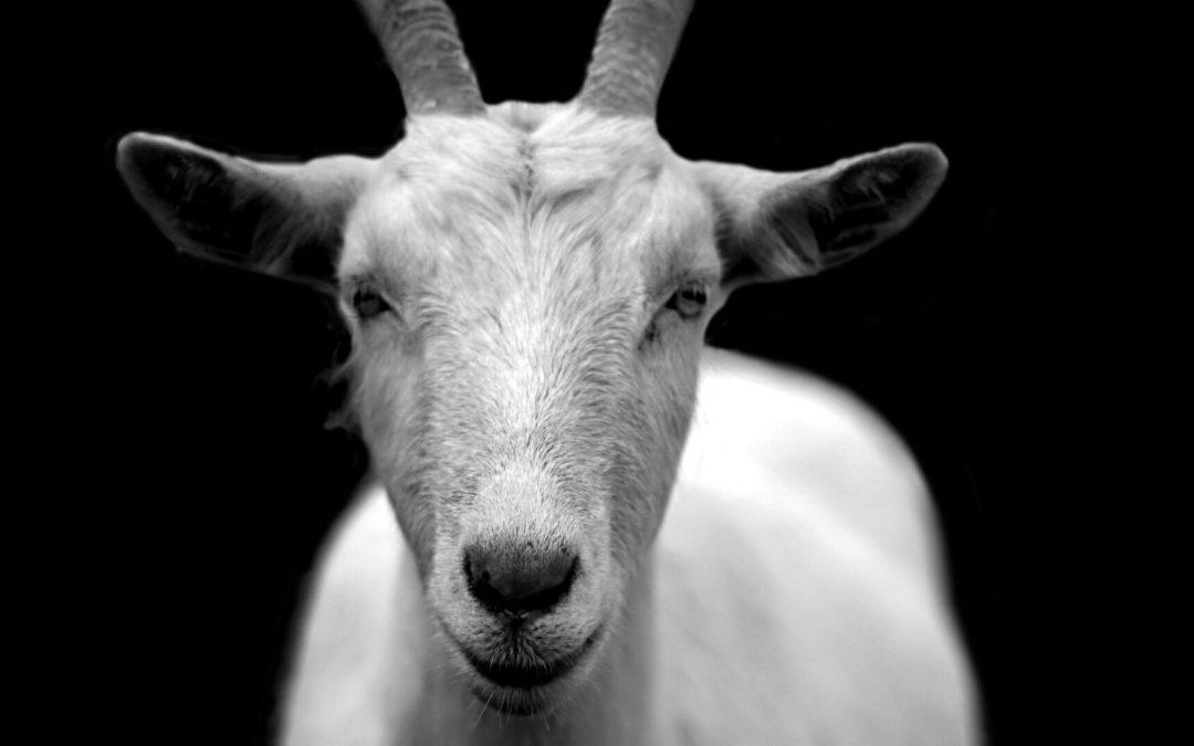 Dlaczego Francuzi mówią: ménager la chèvre et le chou?