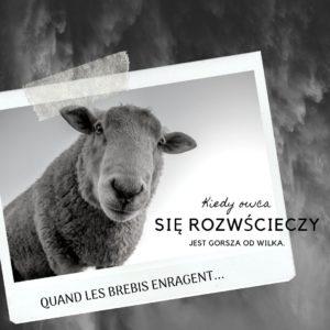 Kiedy owca się rozwścieczy jest gorsza od wilka, czyli sympatyczne francuskie powiedzonka