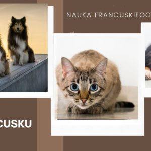 Zwierzęta po francusku i sympatyczne francuskie wyrażenia ze zwierzętami.